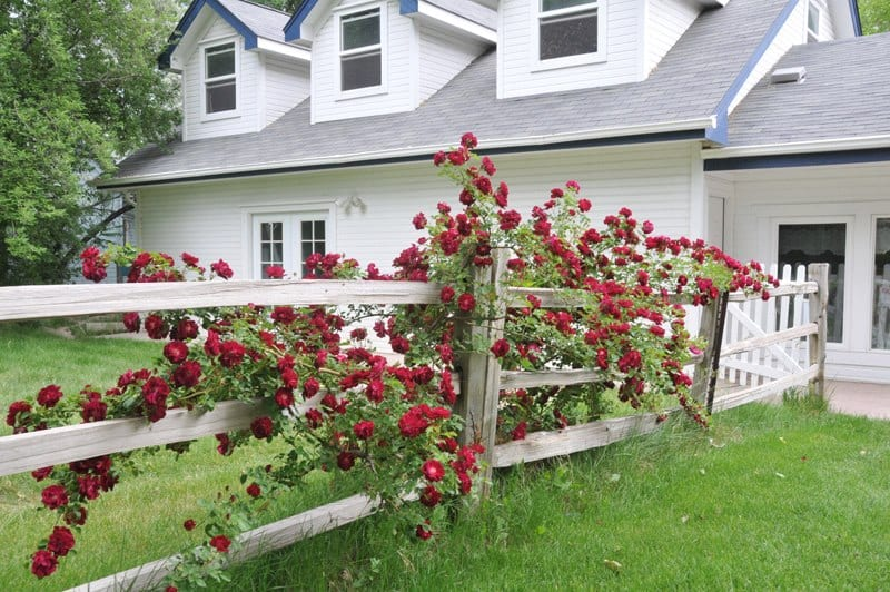 image of willow pond bed and breakfast