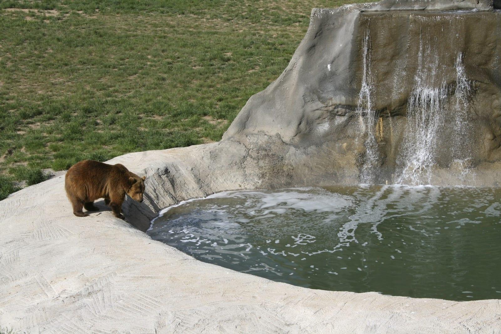 Grizzly Bear Wild Animal Sanctuary Keenesburg CO