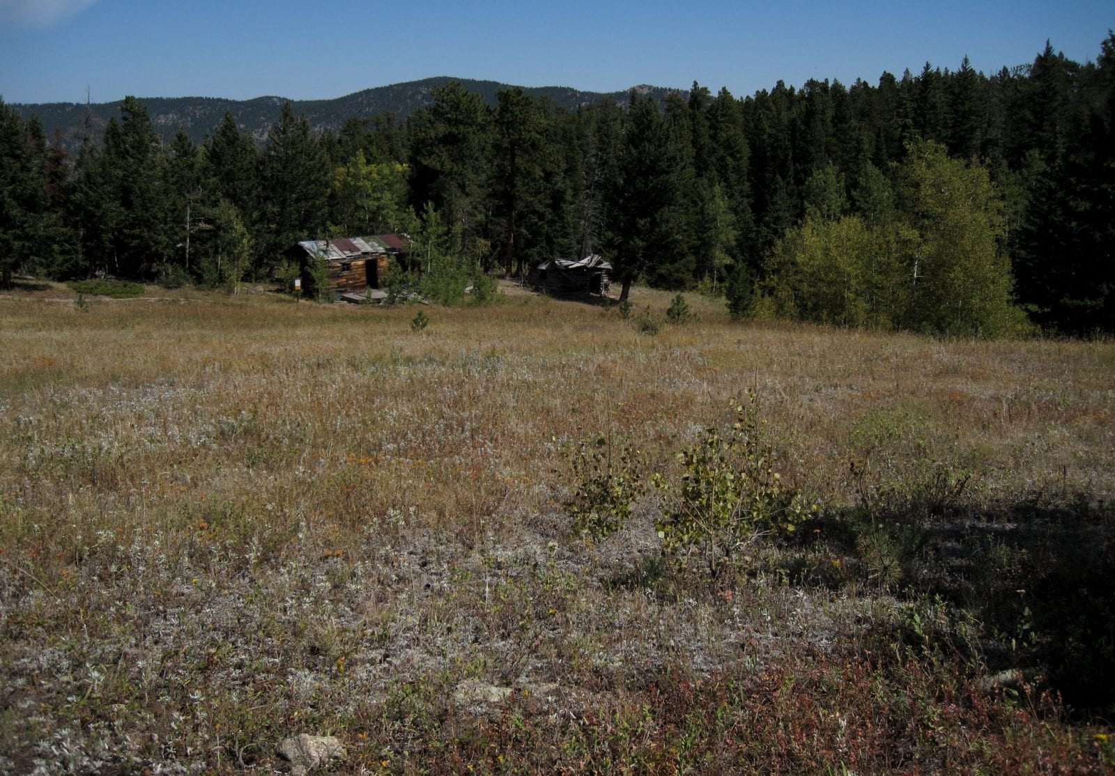 Image of the homestead meadows ghost town in colorado
