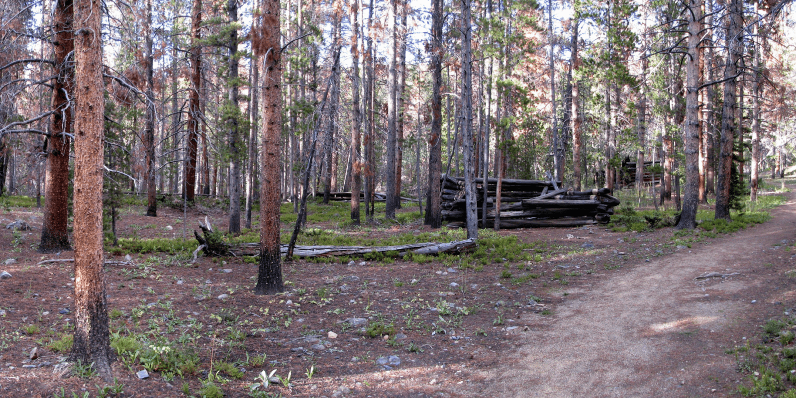 Image of the remnants of teller city in colorado