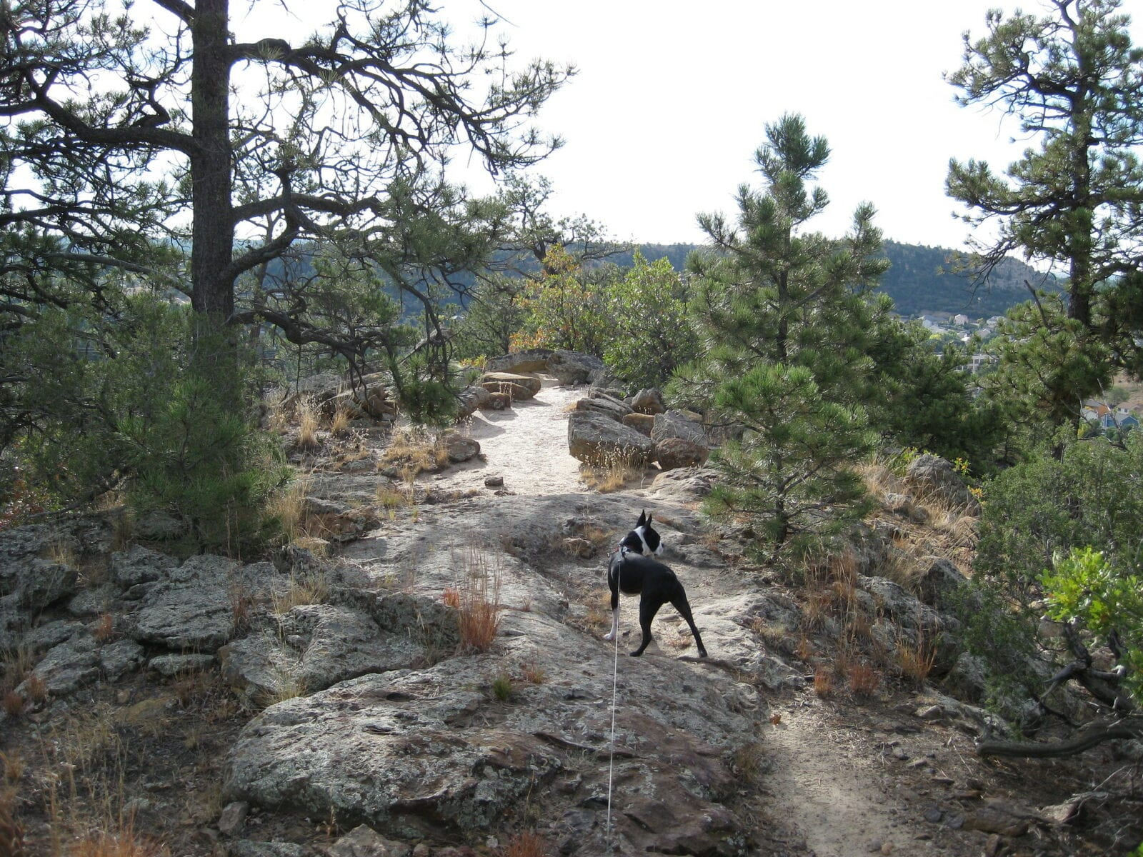 Image of a dog on a hike at the Austin Bluffs Open Space in Colorado Springs, Colorado