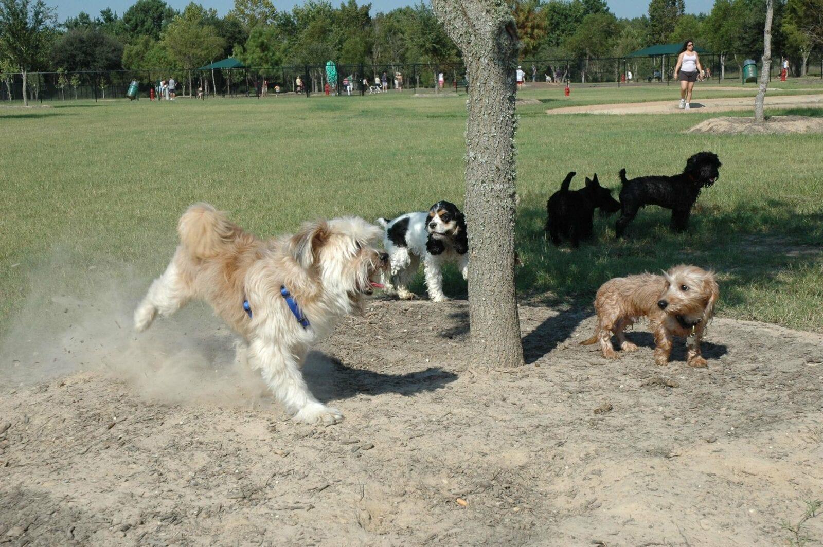 Image of dog plays in the bear creek regional park dog park in colorado springs, colorado