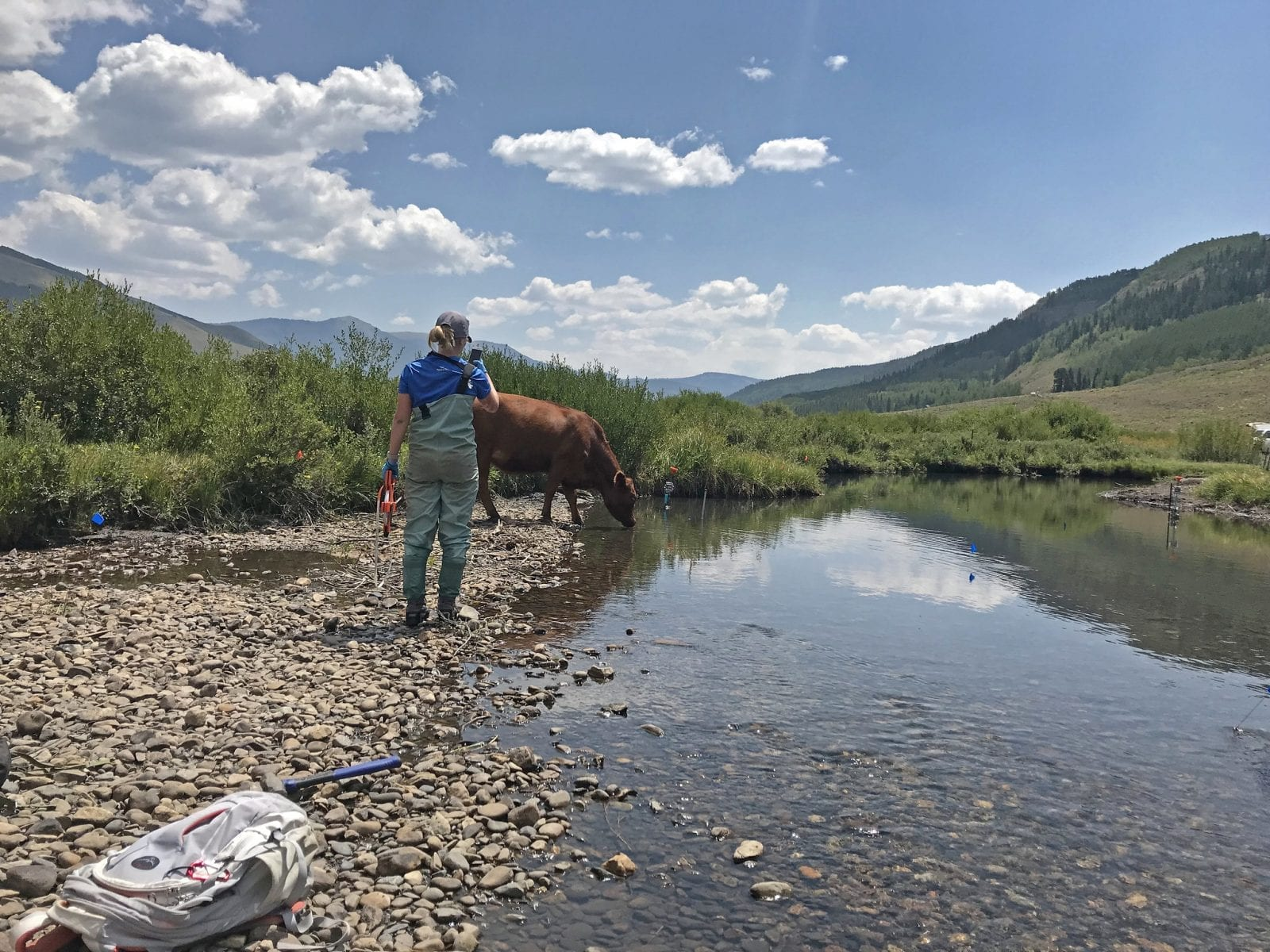 Image of a woman with a cow drinking water at the East River in Colorado