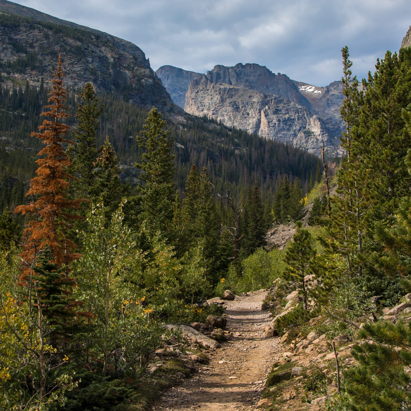 Glacier Creek Trail Hiking Taman Nasional Pegunungan Rocky