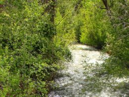 Image of the Mancos River in Colorado flowing through trees