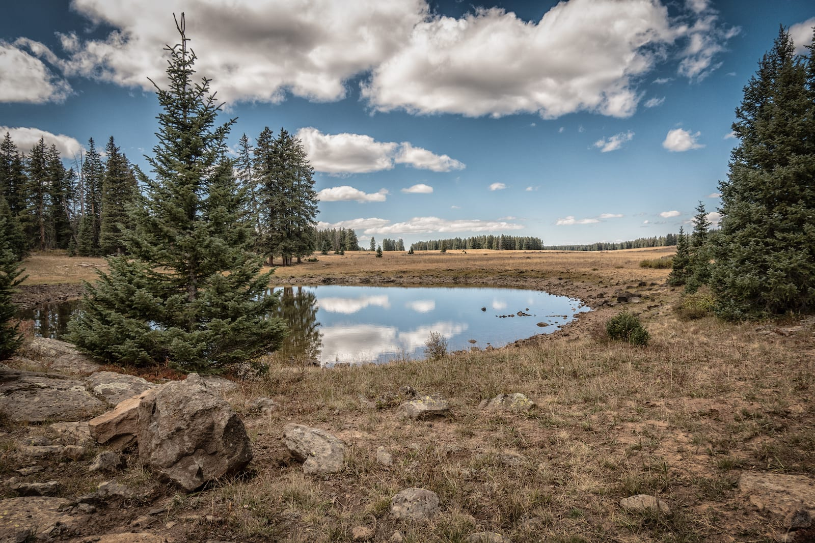 Mesa Top Trail Grand Mesa National Forest