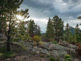 Roosevelt National Forest Nederland Colorado