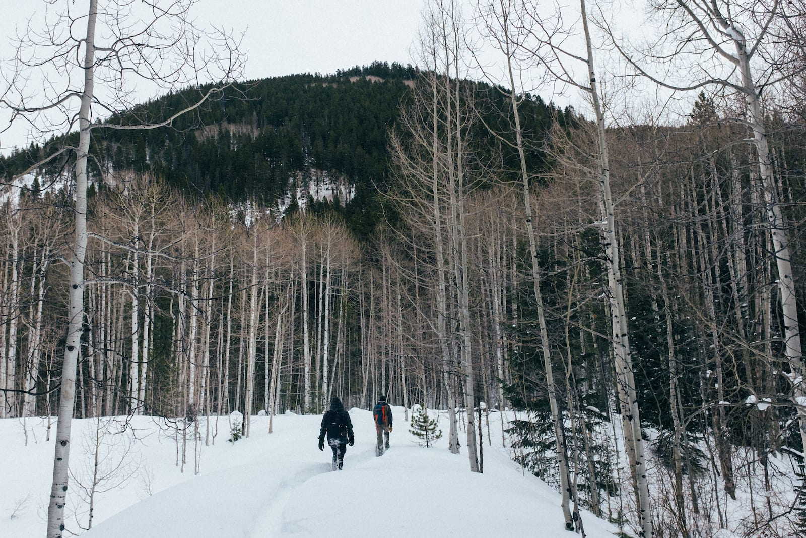 Penyelundup Sepatu Salju Jejak Gunung Aspen CO