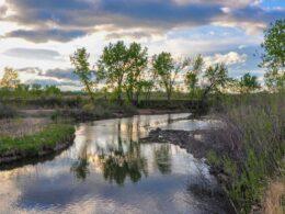 South Platte Park Littleton Colorado Springtime