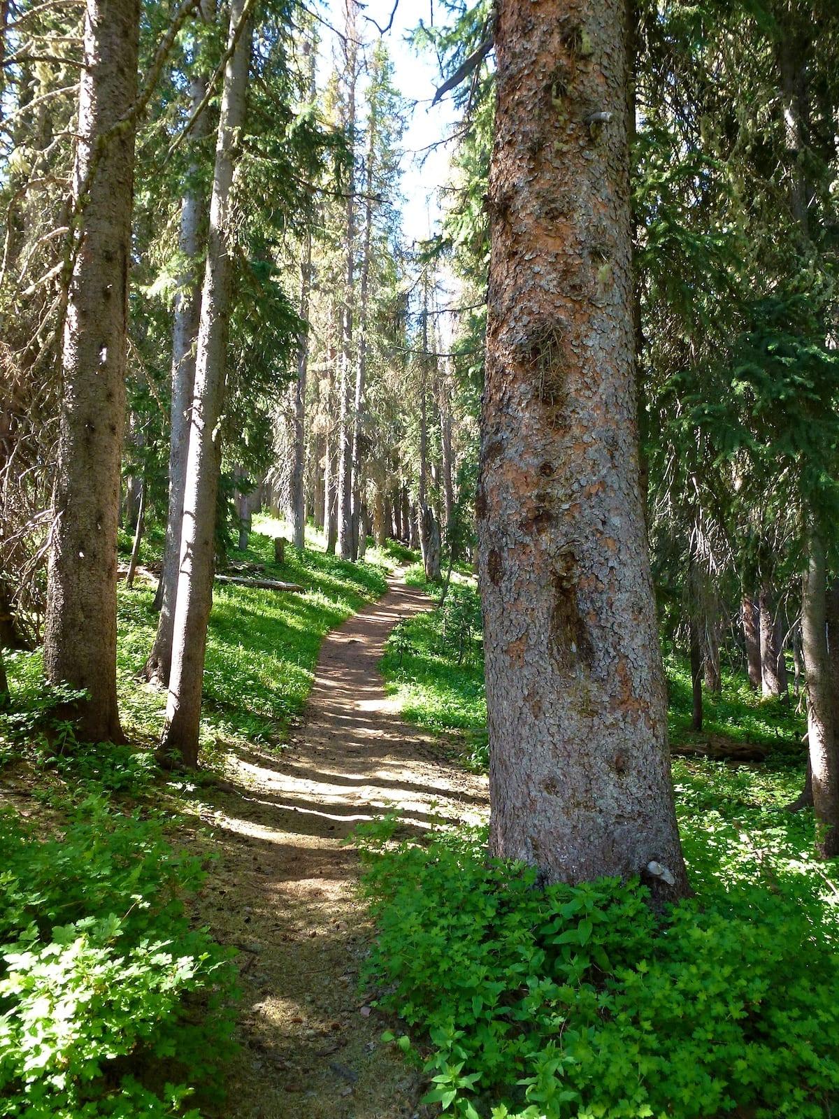 Wolf Creek Pass Continental Divide Trail