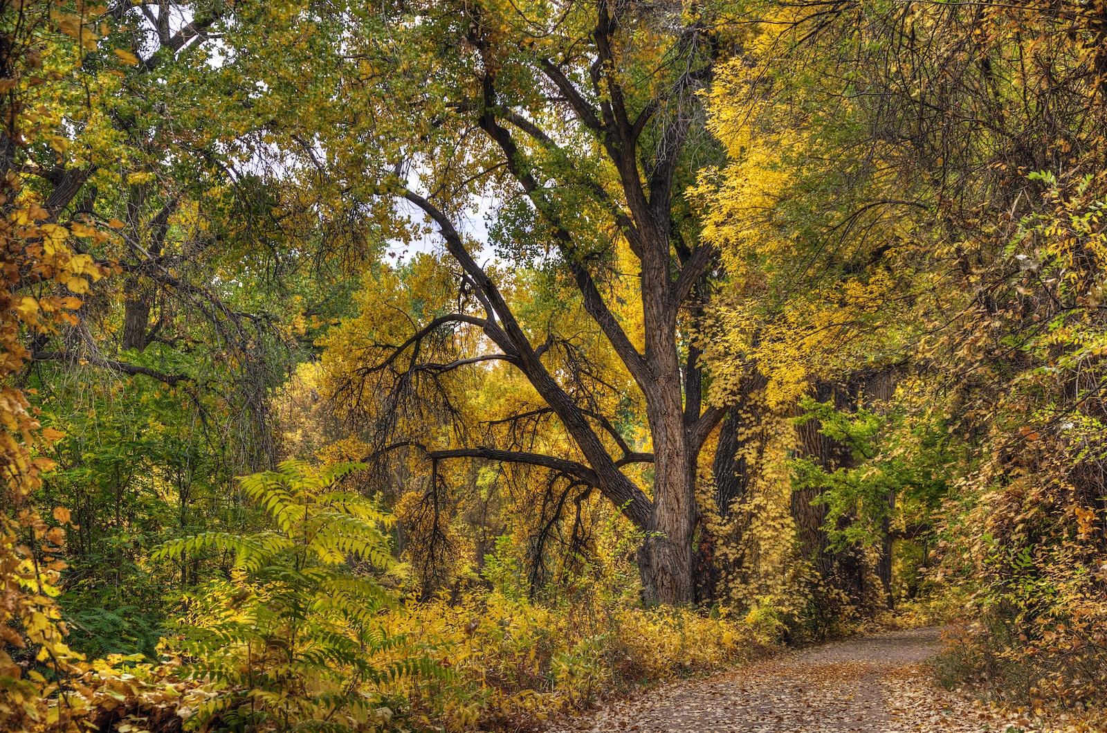 Arkansas Riverwalk Trail Canon city, CO
