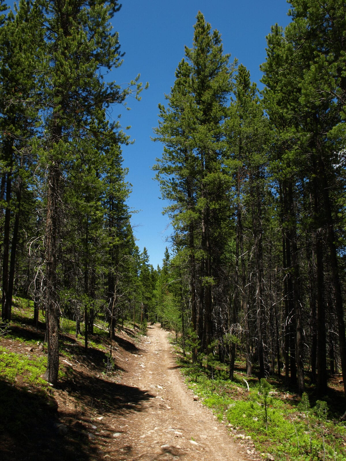 Burro Trail in Breckenridge, Colorado
