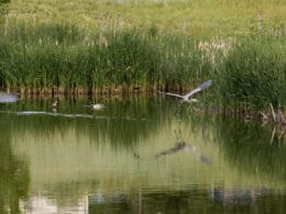 Image of the hyland ponds open space in Westminster, Colorado