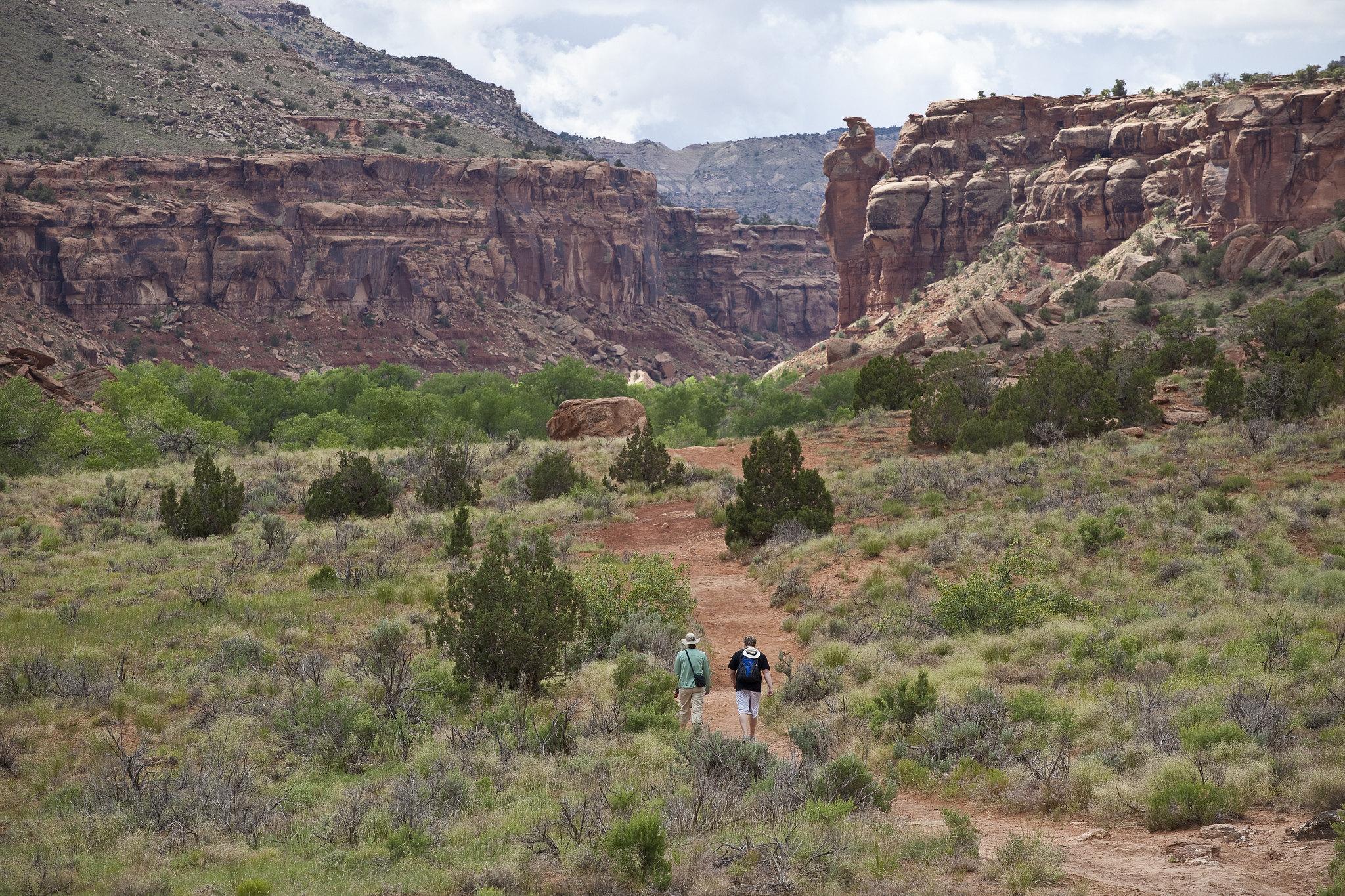 image of uncompahgre plateau