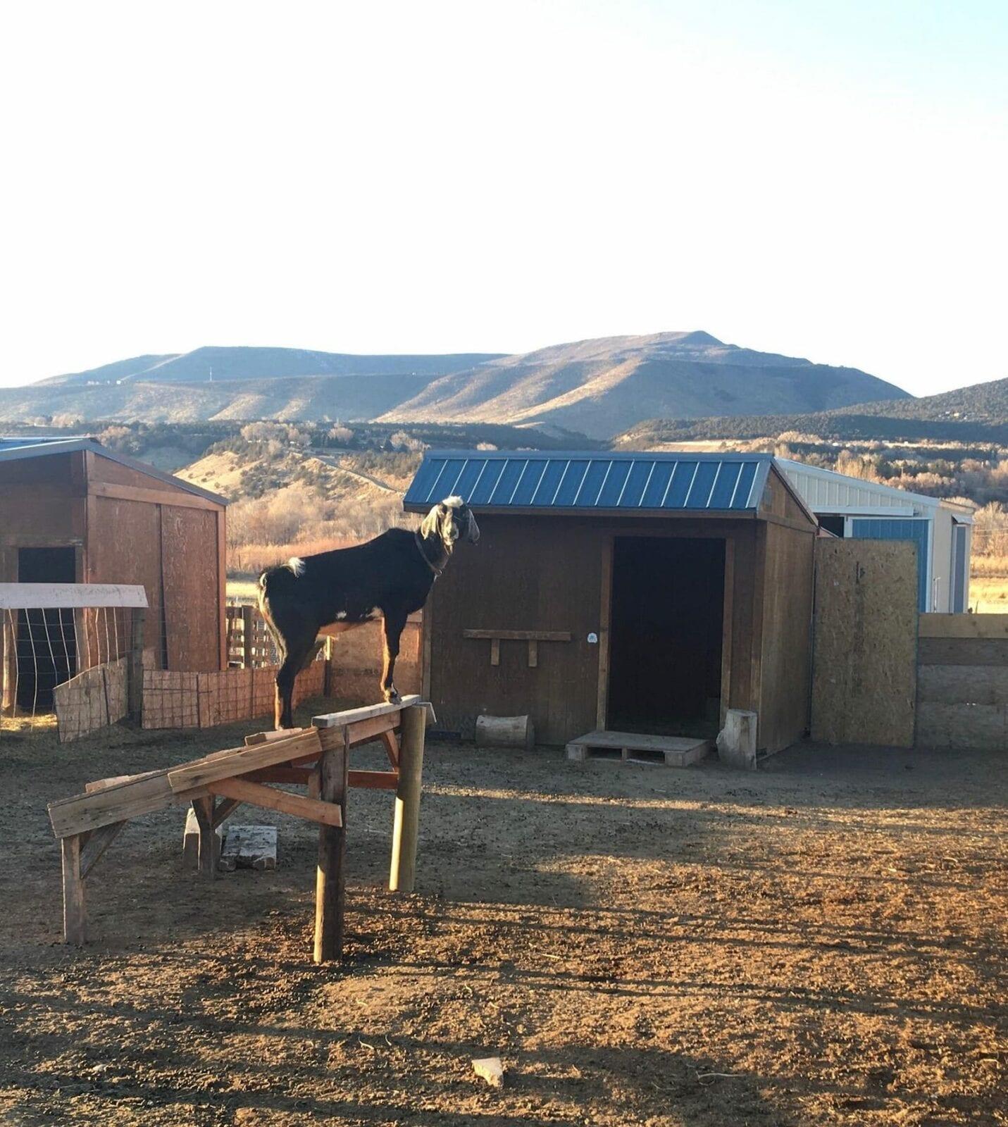 Western Culture Farmstead, CO