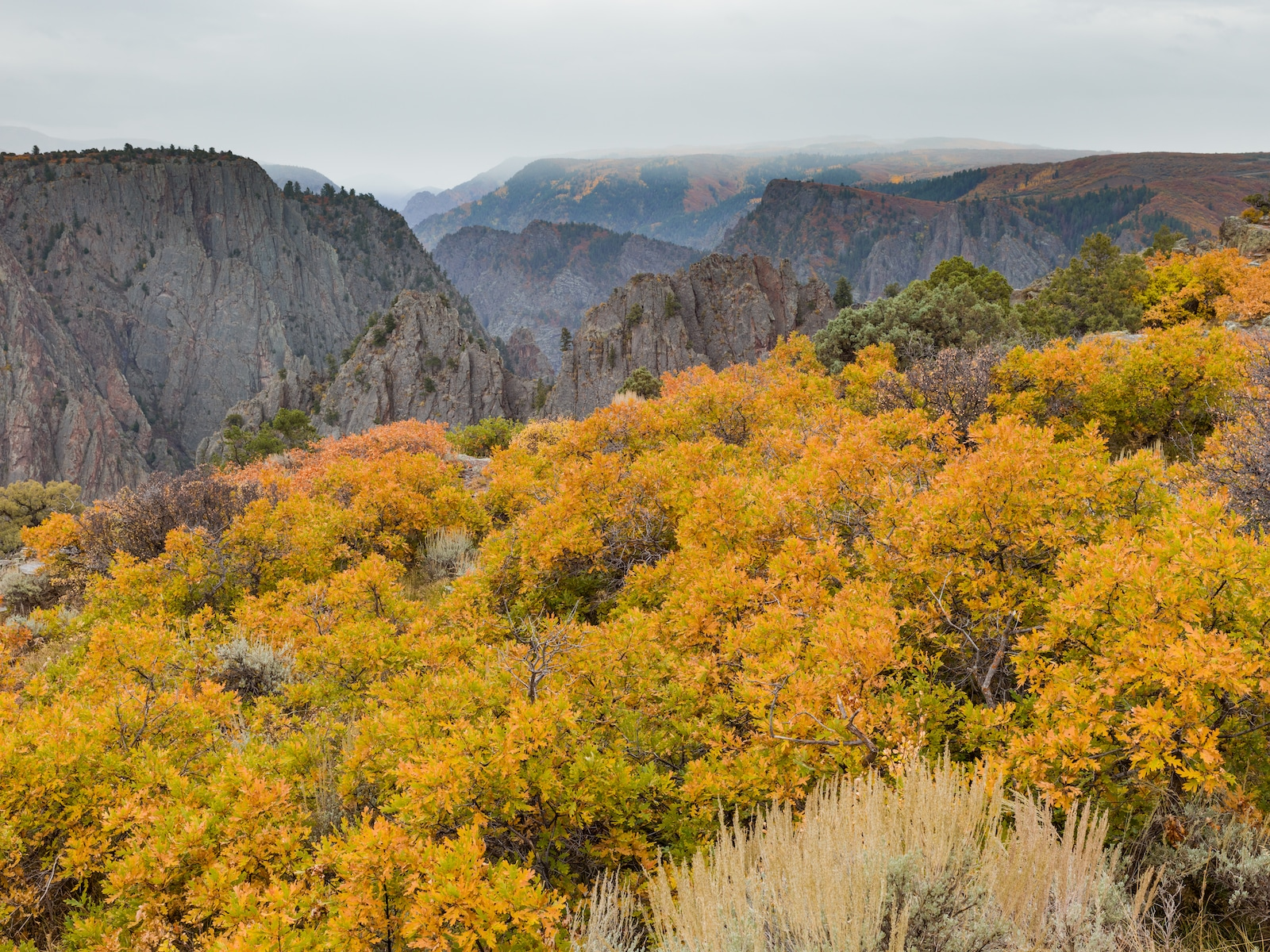 Black Canyon of the Gunnison Fall Colors Montrose CO