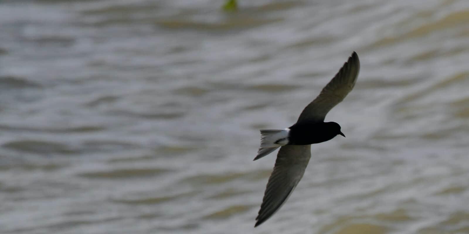 Lake Henry Crowley County Colorado Bird