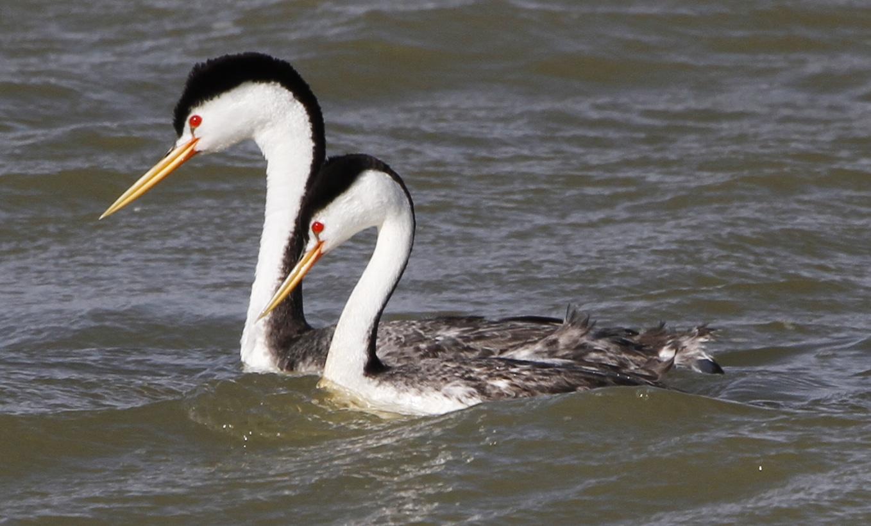 Lake Henry Ordway CO Wildlife