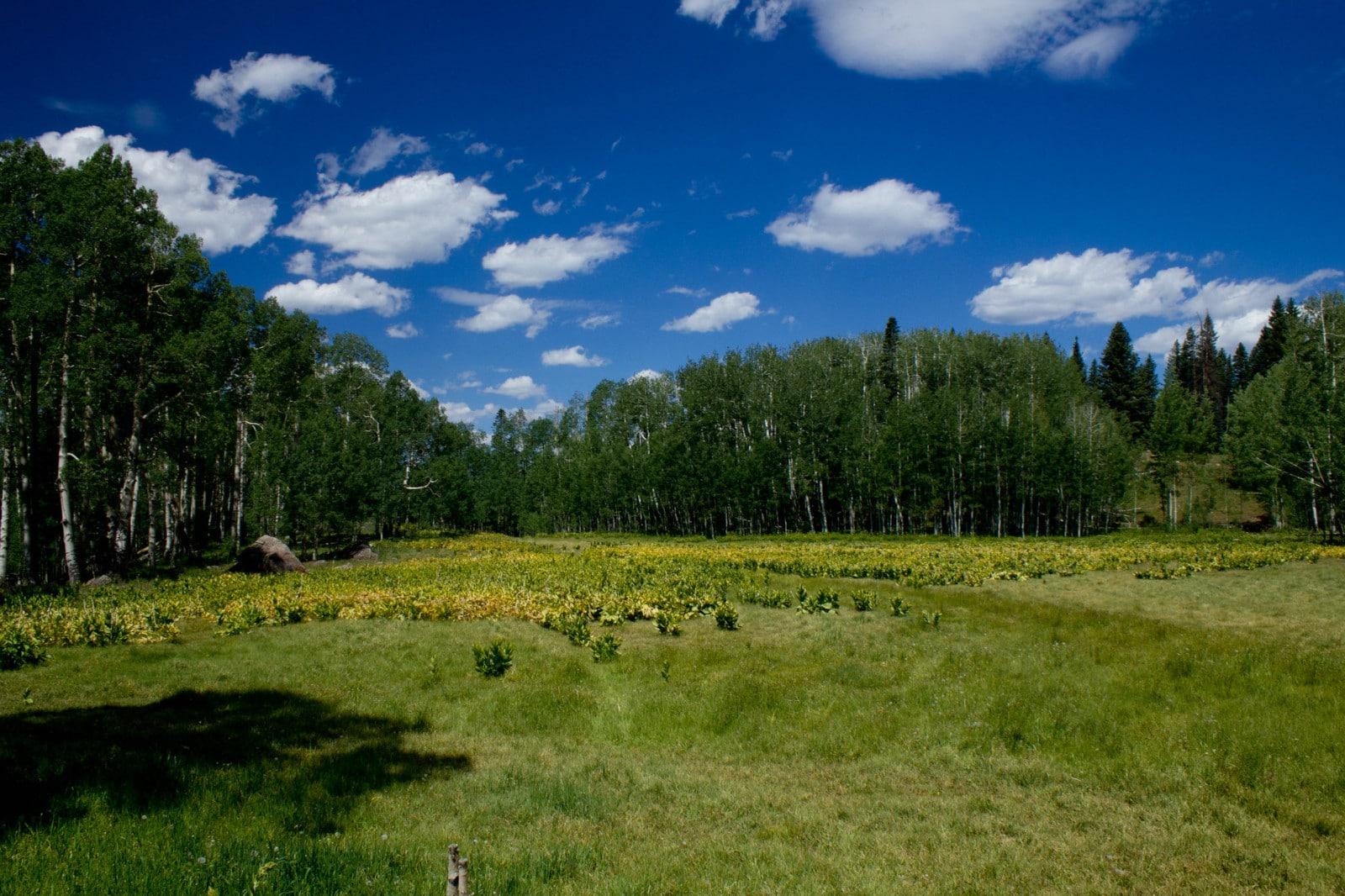 Image of Deb's Meadow in Owl Creek Pass in Ridgway, Colorado