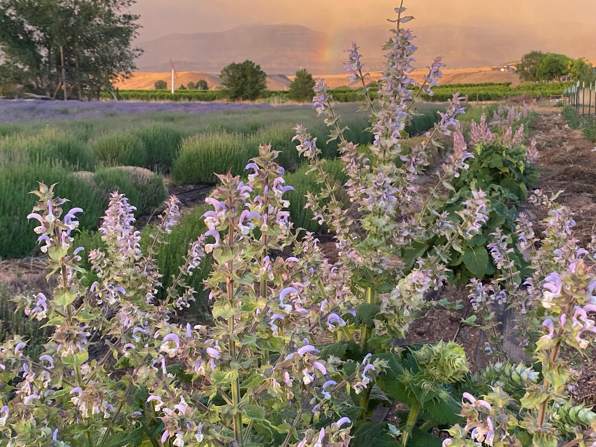 image of sage creations organic farm