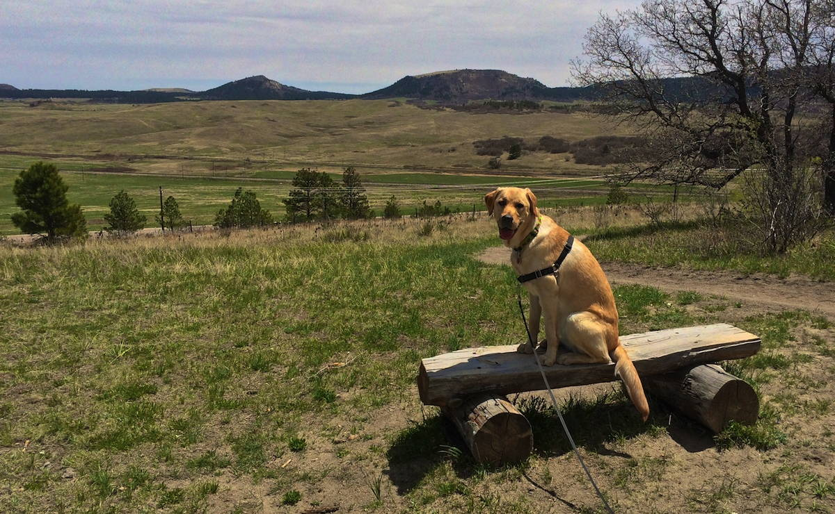 Image of a dog on a bench at the Spruce Mountain Open Space in Larkspur, Colorado