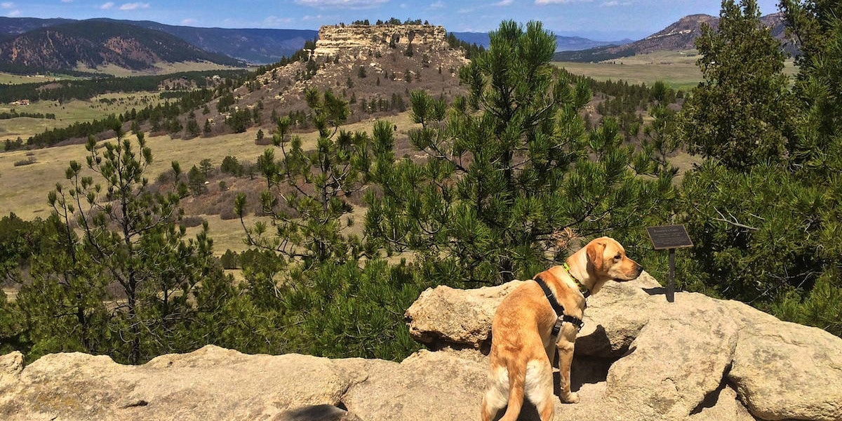 Image of a dog at the Spruce Mountain Open Space in Larkspur, Colorado