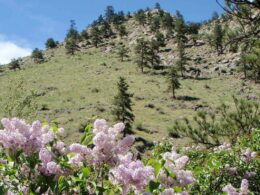 Image of flowers blooming at Viestenz-Smith Mountain Park in Loveland, Colorado