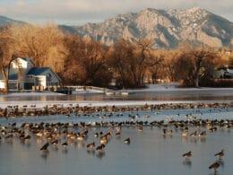 Image of the Waneka Lake in Lafayette, Colorado