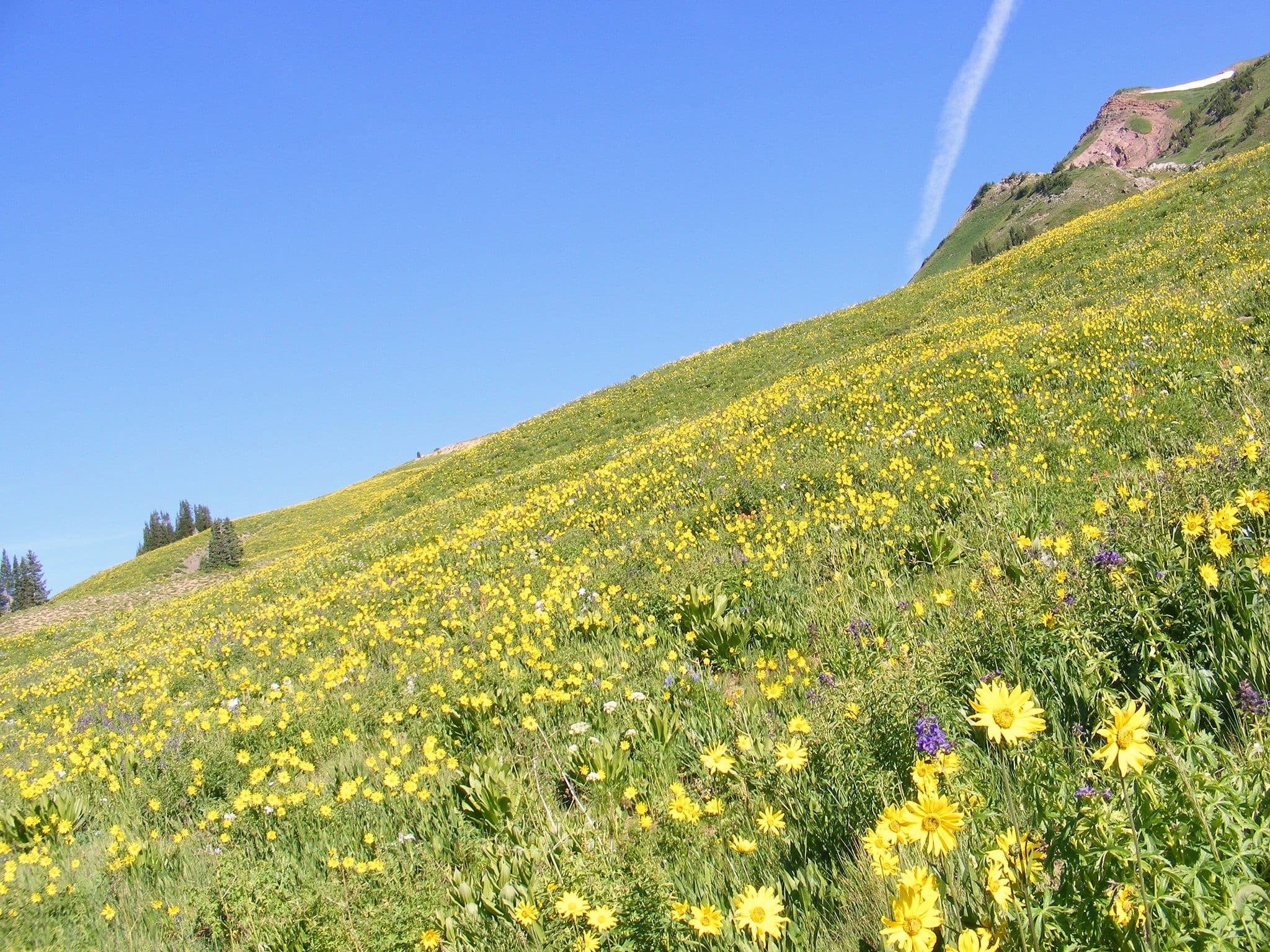 image of wildflowers in crested butte