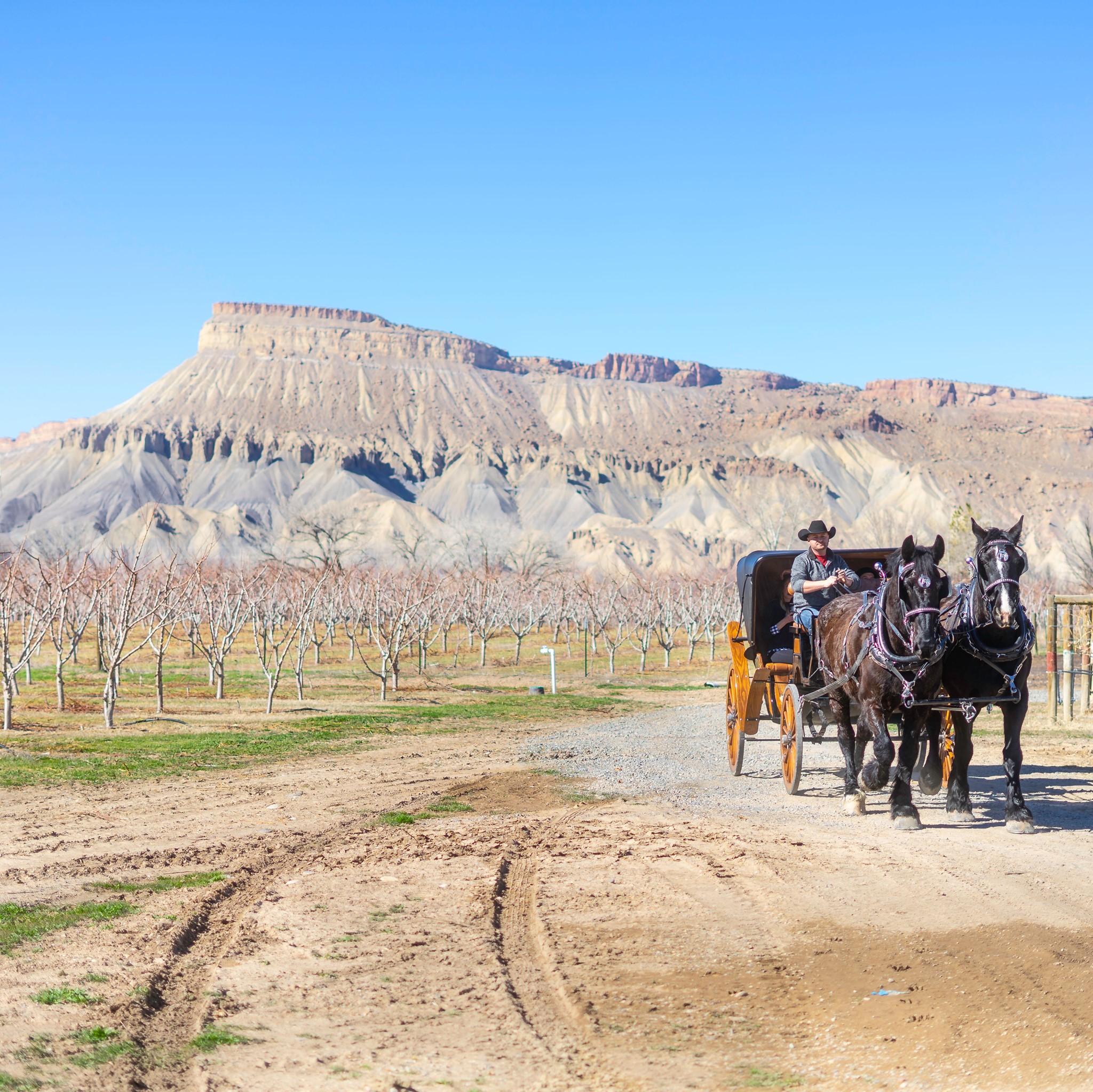 image of wine tours palisade