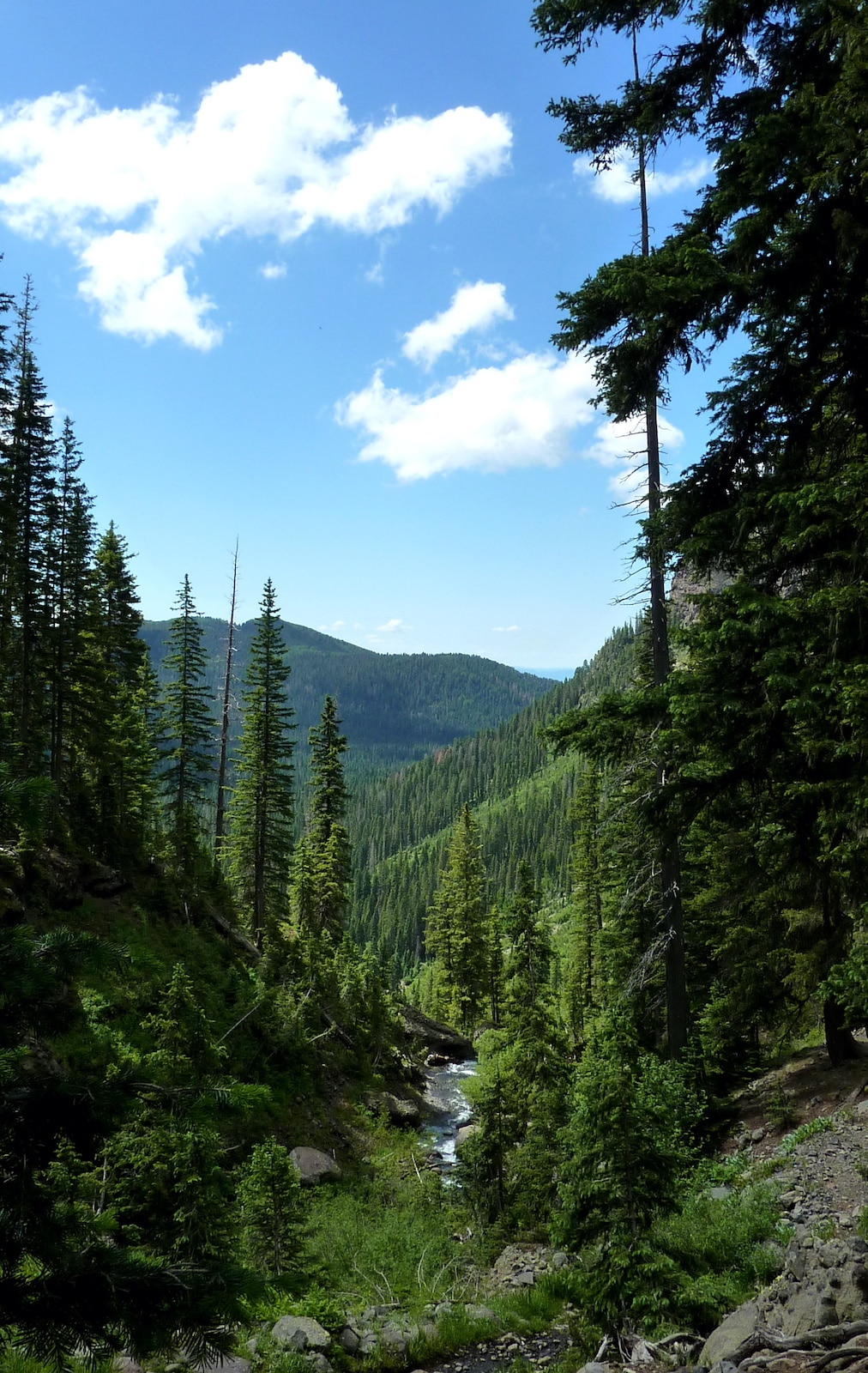 Pemandangan dari Fourmile Trail Di Atas Air Terjun Atas Colorado