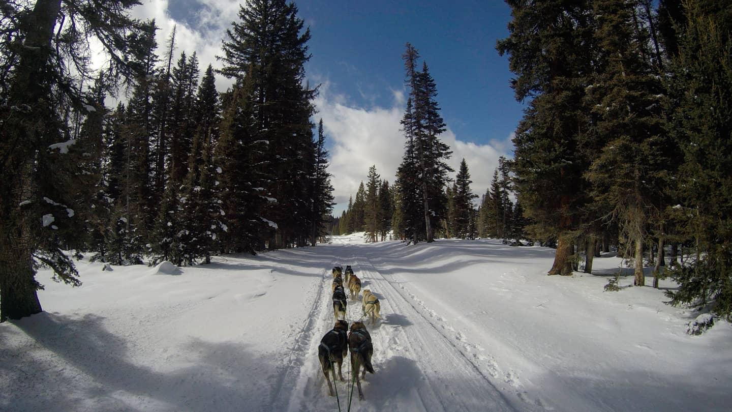 Image of the Durango Dog Ranch dogs pulling a sled in the snow