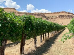Image of rows of vines in a vineyard in the Fruit & Wine Scenic Byway in Palisade, Colorado