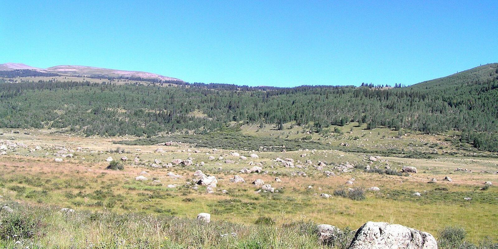Alpine Meadow Hinsdale County Colorado