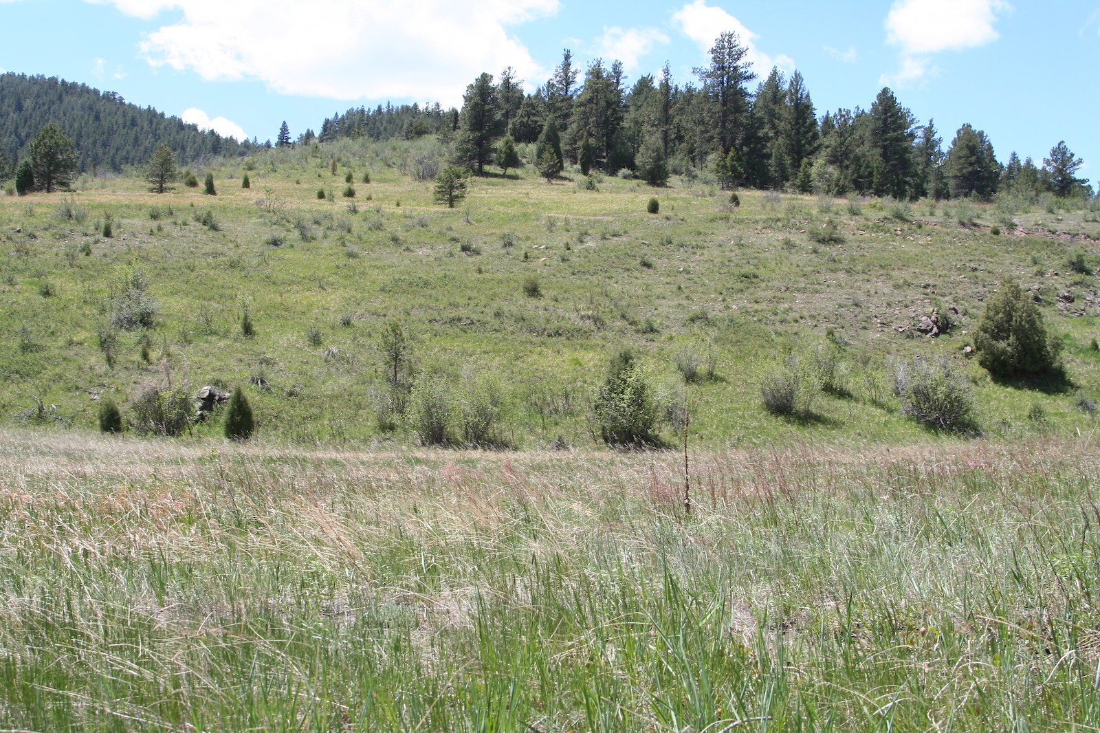 Image of the landscape at Lair o' the Bear Park in Idledale, Colorado