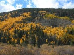 Image of Pike's Peak National Forest near Breckenridge, Colorado