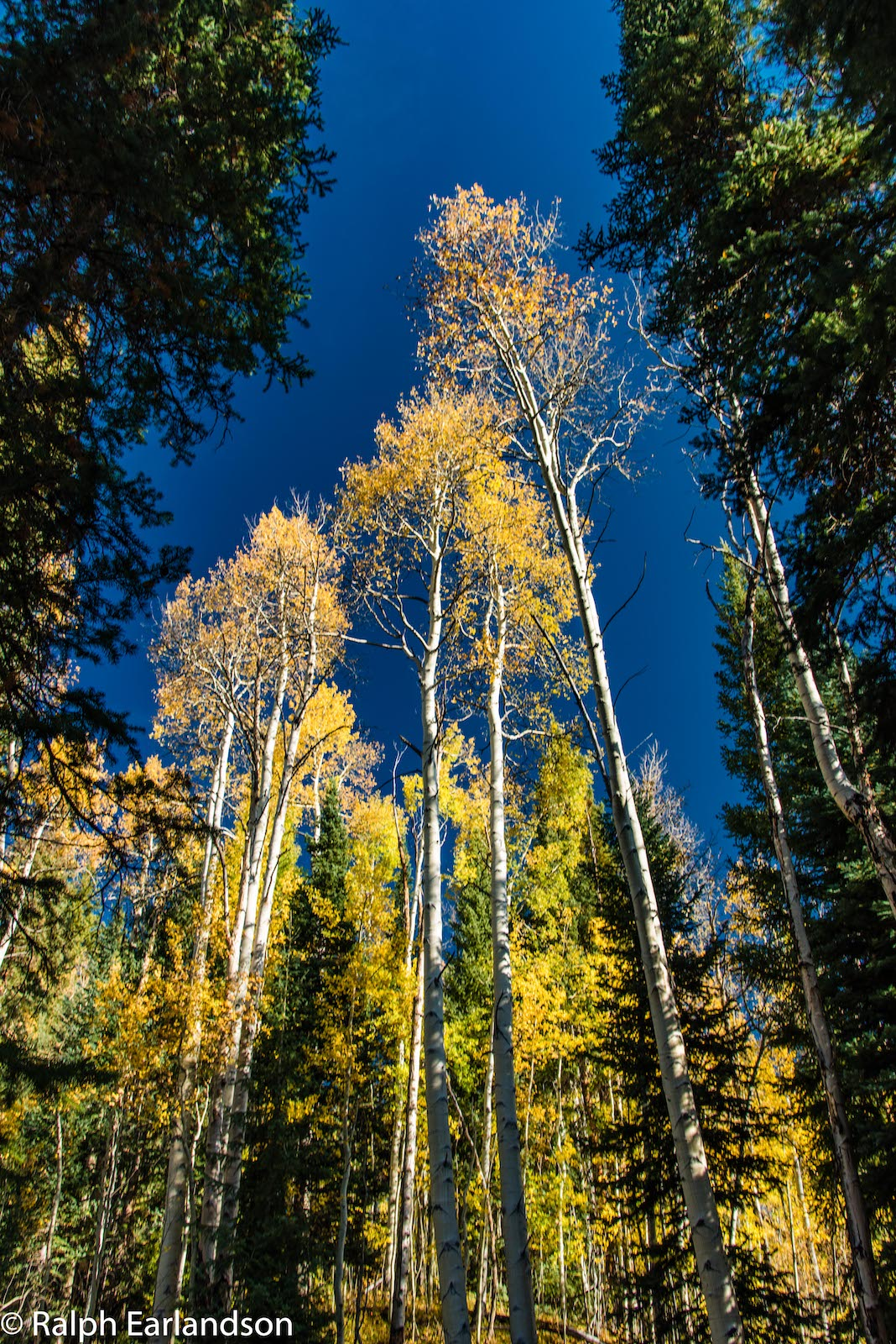 Aspen Hutan Nasional Sungai Putih Warna Jatuh Frisco CO