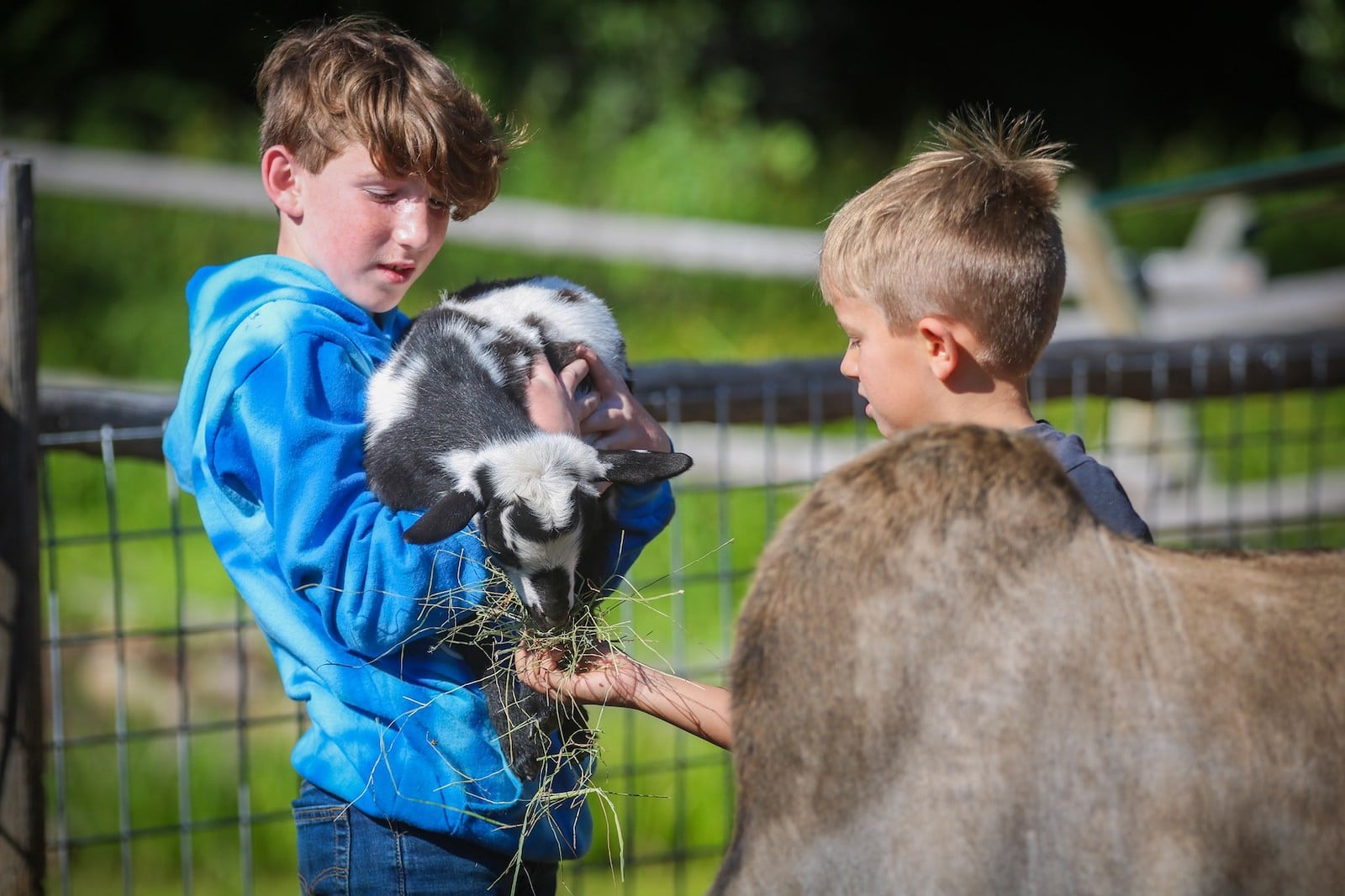 Image of kids working with animals at Bar Lazy J Guest Ranch in Parshall, Colorado