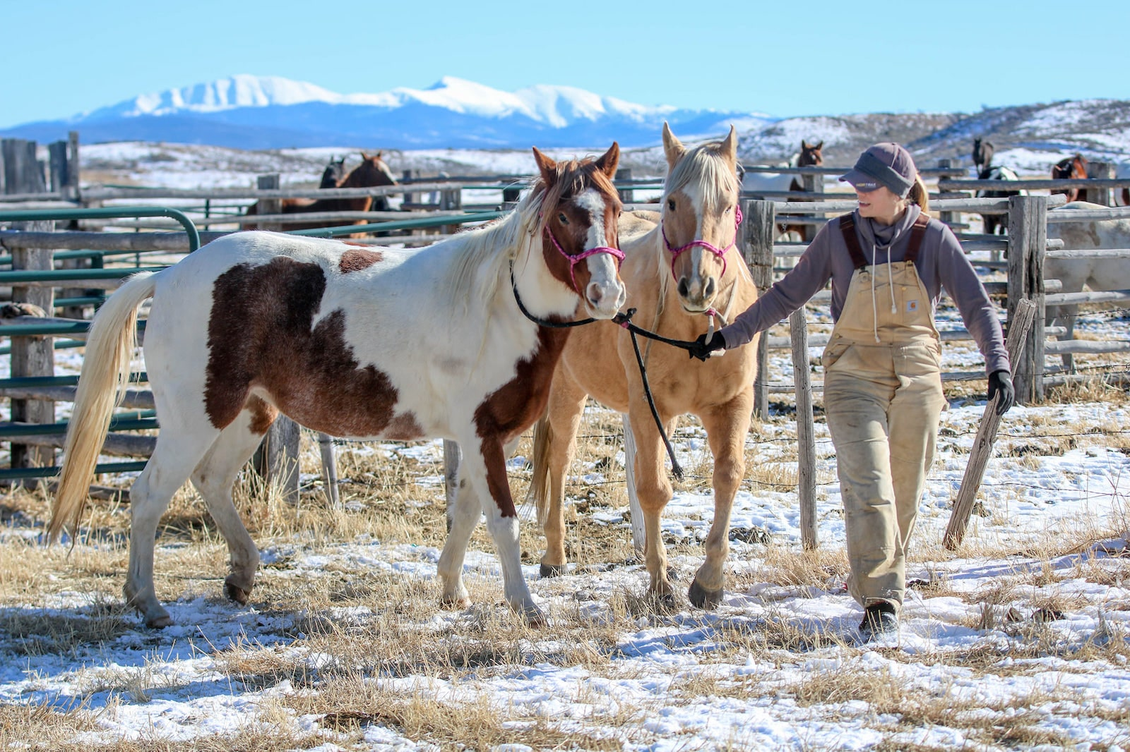 Image of a woman leading horses at Bar Lazy J Guest Ranch in Parshall, Colorado
