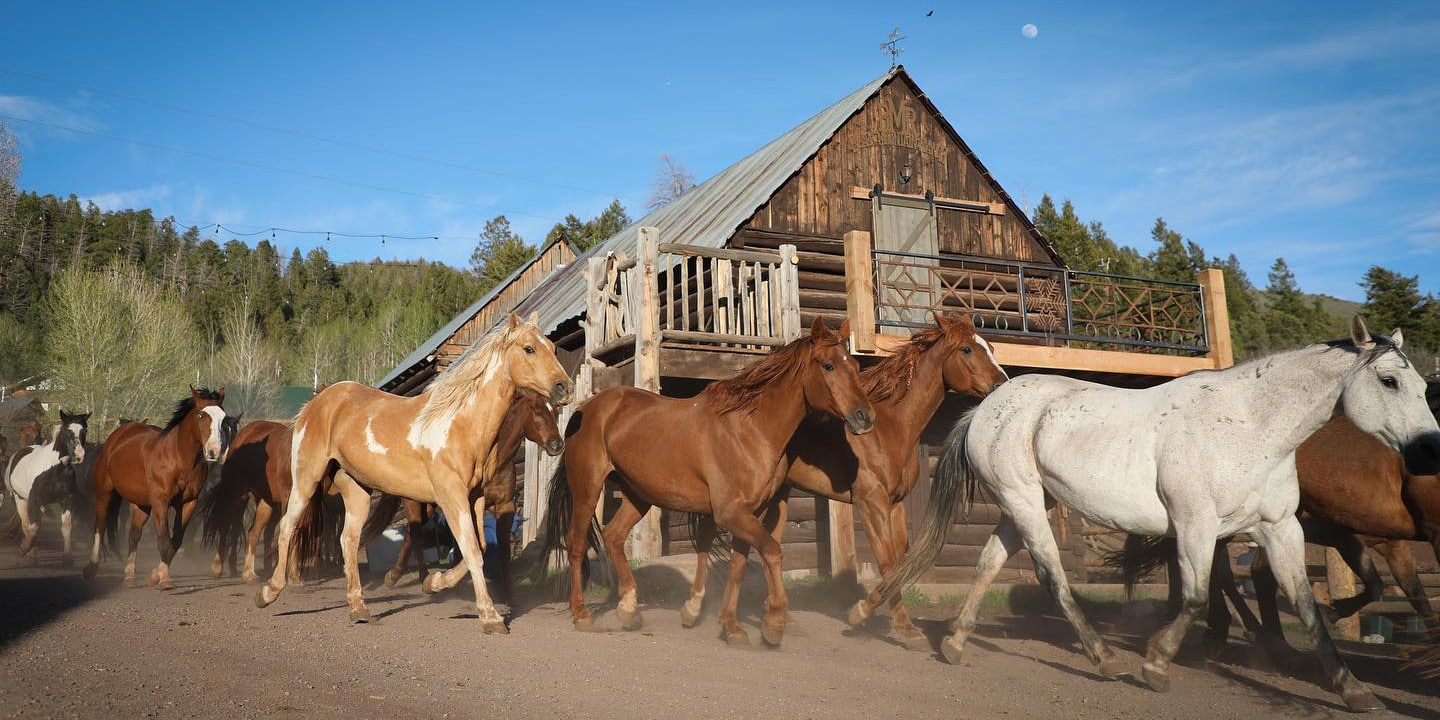 Image of horses at the Black Mountain Colorado Dude Ranch in McCoy