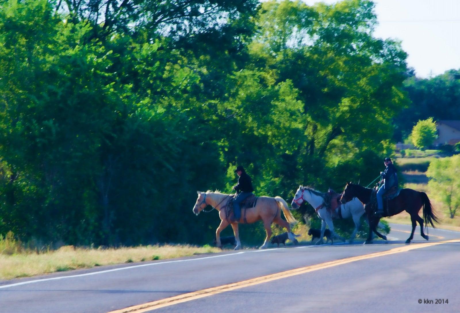 Going hunting on Horseback Colorado