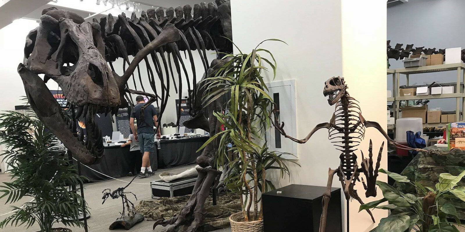 Image of a T-Rex at the Denver Mineral Show