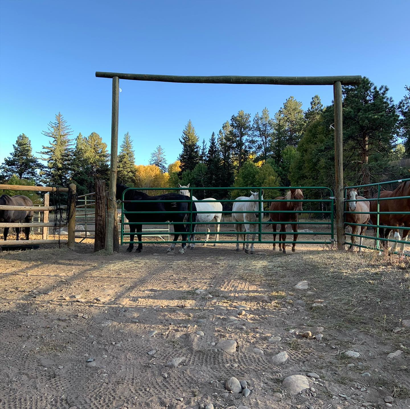 Image of horses at the North Fork Ranch in Shawnee, Colorado
