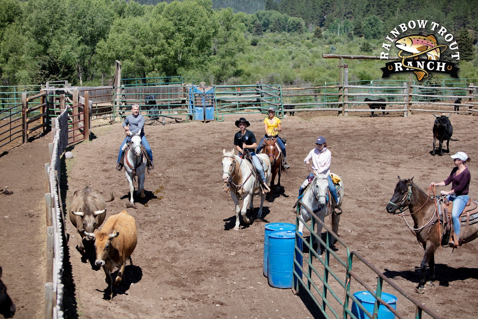 Image of people herding cattle at Rainbow Trout Ranch in Colorado