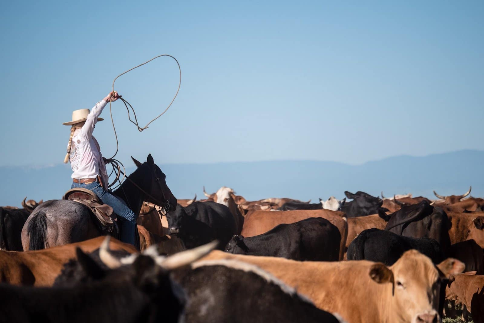 Image of a staff member herding cattle at Ranchlands Zapata Ranch in Mosca, Colorado