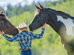 Image of a child with two horses at Vista Verde Ranch in Clark, Colorado