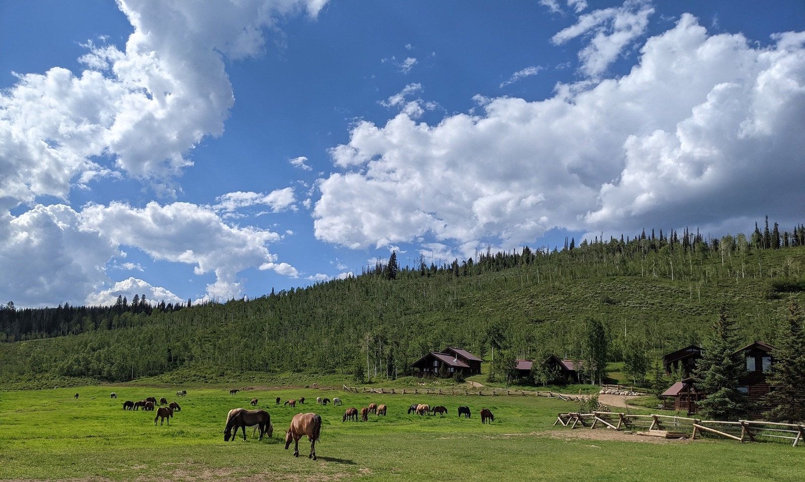 Image of horses on the property at Vista Verde Ranch in Clark, Colorado