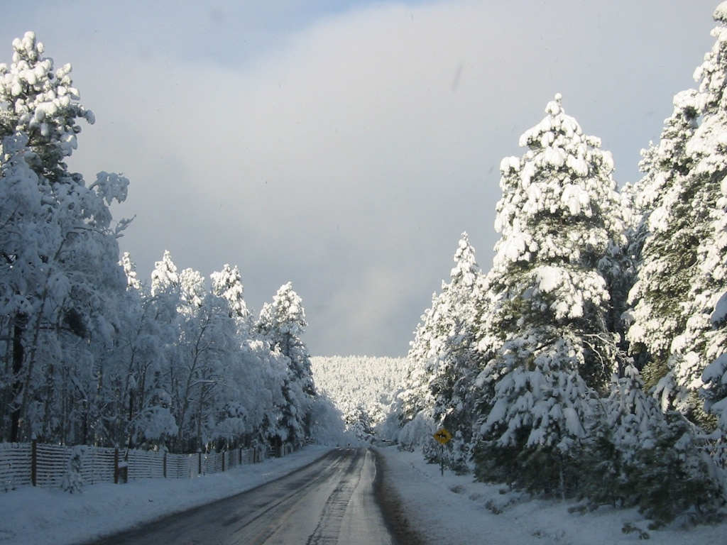 Wintertime in Conifer Colorado Snow covered Evergreen Trees