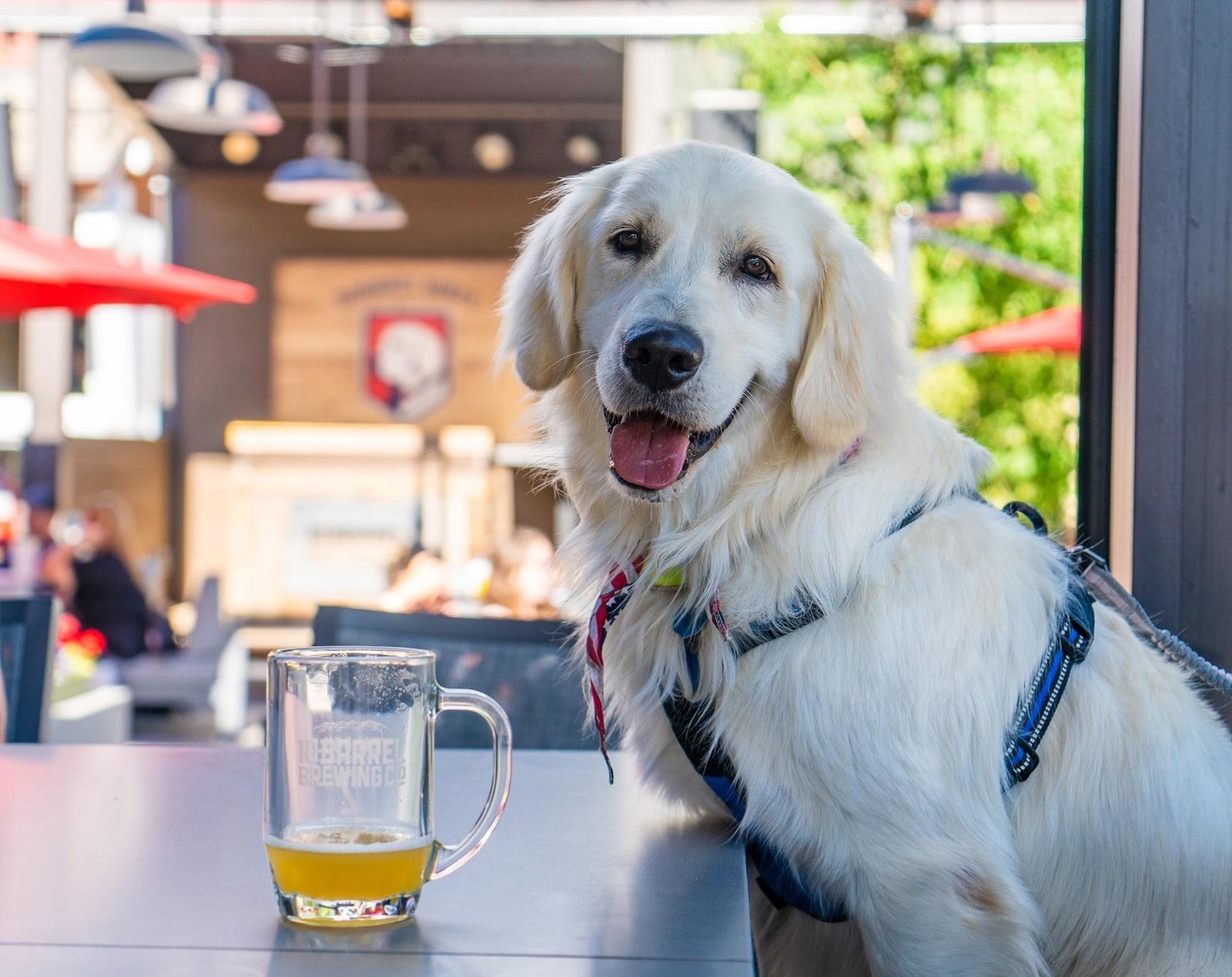 Gambar anjing dan bir di Copper Mountain, Colorado untuk Yappy Hour