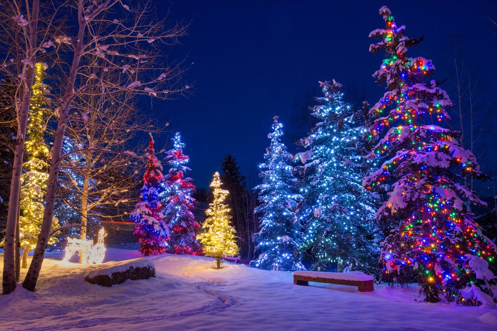 Image of illuminated trees in Aspen Snowmass, Colorado during winter
